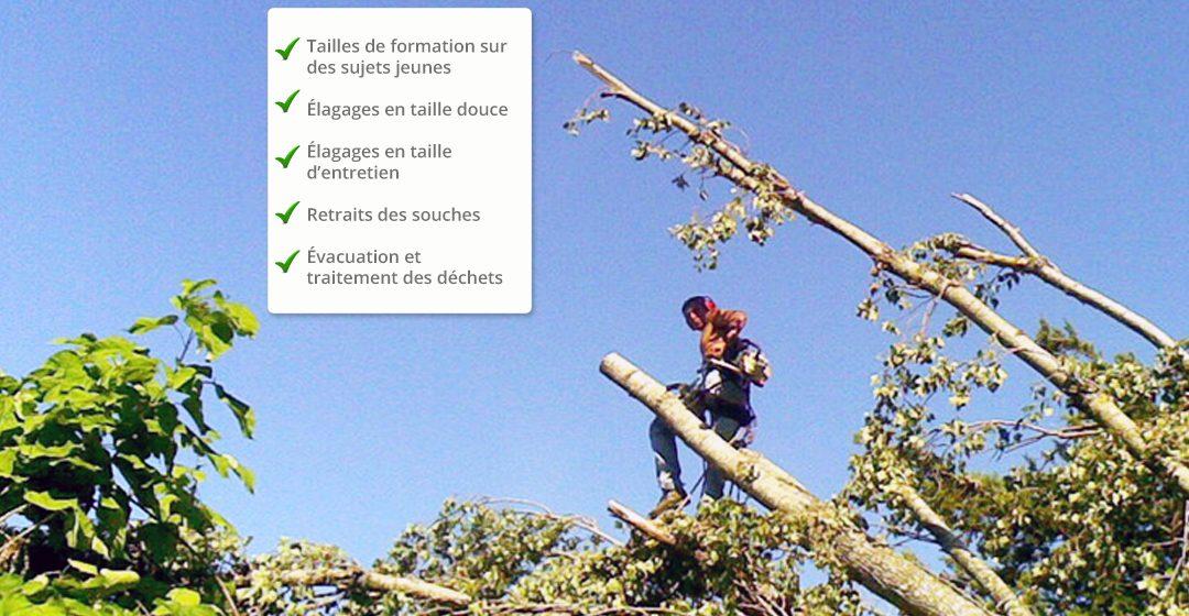 Elagage entretien arbres